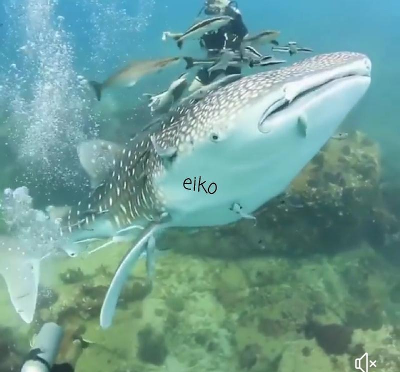 f:id:eiko-maldives:20181222035543j:plain