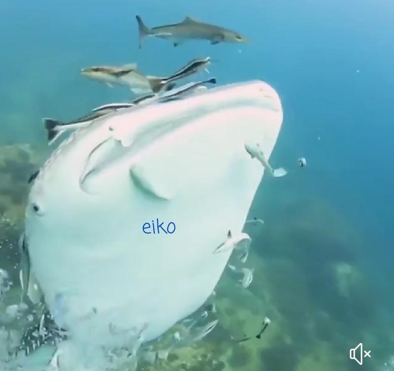 f:id:eiko-maldives:20181222035547j:plain