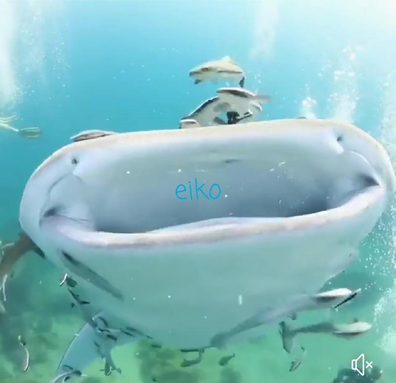 f:id:eiko-maldives:20181222035552j:plain