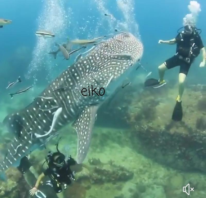 f:id:eiko-maldives:20181222035555j:plain
