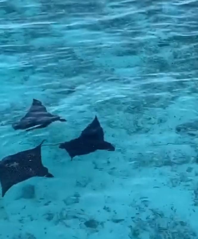 f:id:eiko-maldives:20181228003259j:plain