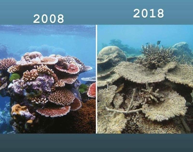 f:id:eiko-maldives:20190117003214j:plain