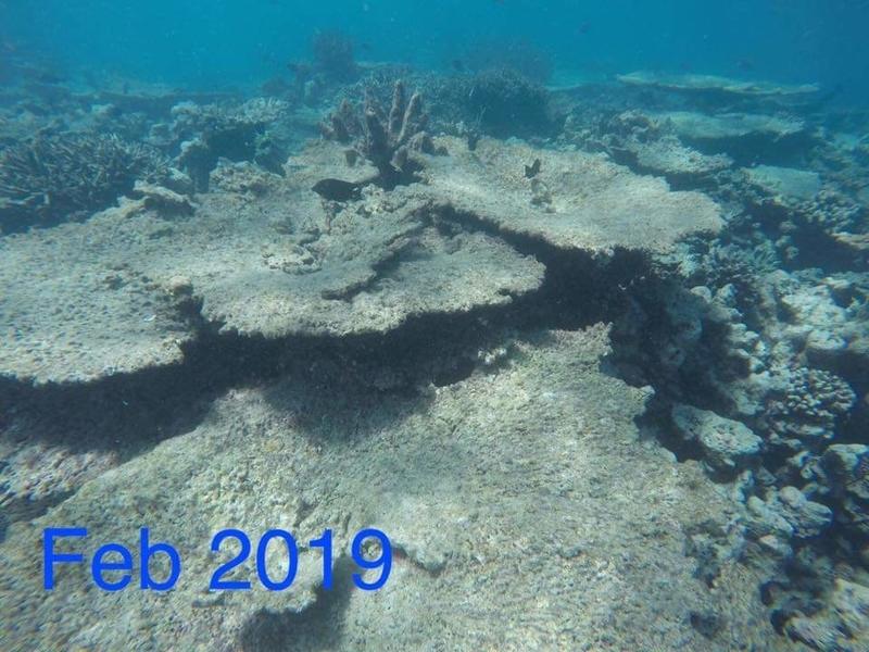 f:id:eiko-maldives:20190208012443j:plain