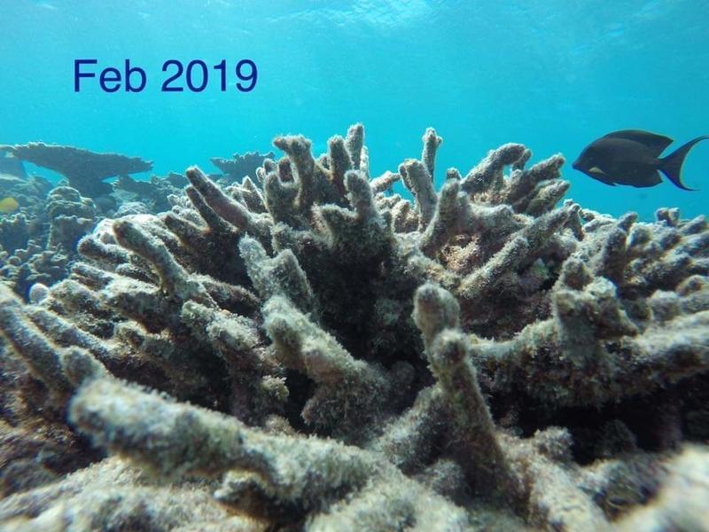 f:id:eiko-maldives:20190208012451j:plain