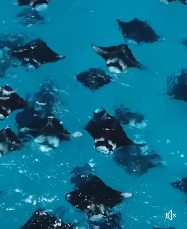 f:id:eiko-maldives:20190429005524j:plain