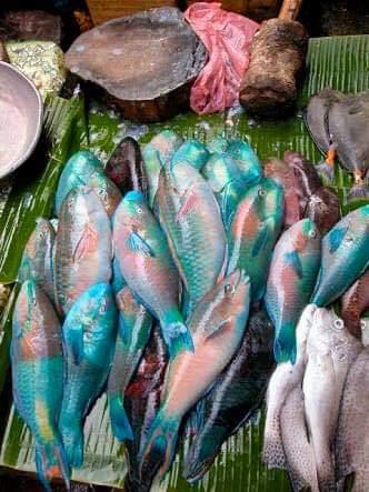f:id:eiko-maldives:20190602012014j:plain