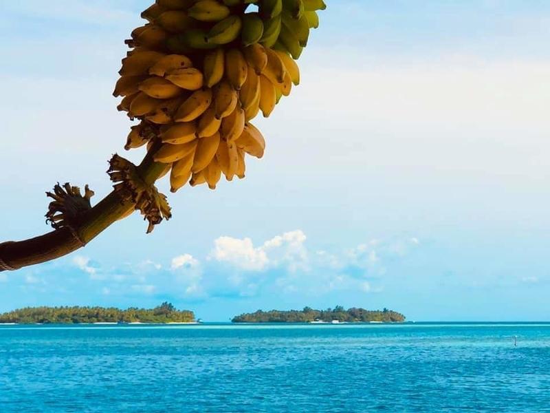 f:id:eiko-maldives:20200424001359j:plain