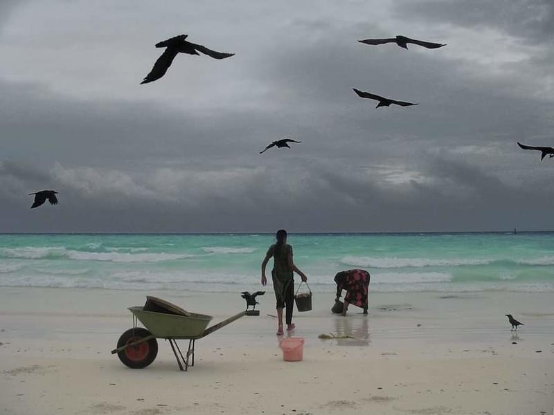 f:id:eiko-maldives:20200519010646j:plain