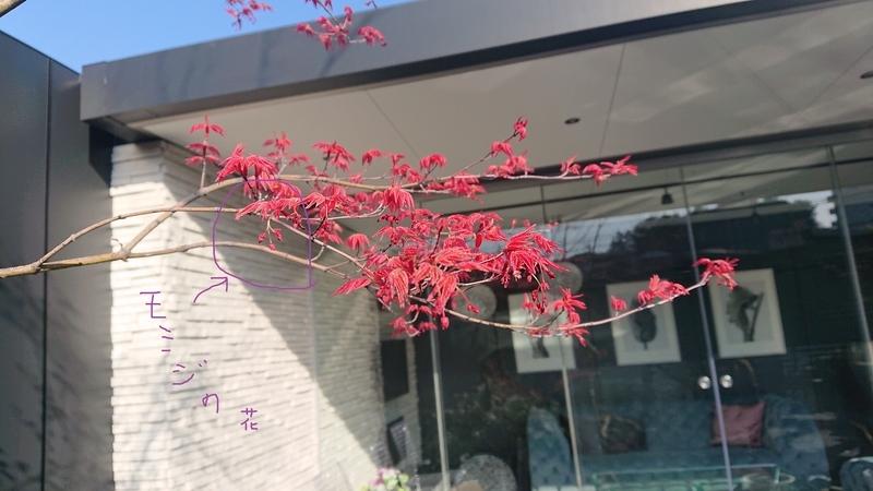 モミジ 花