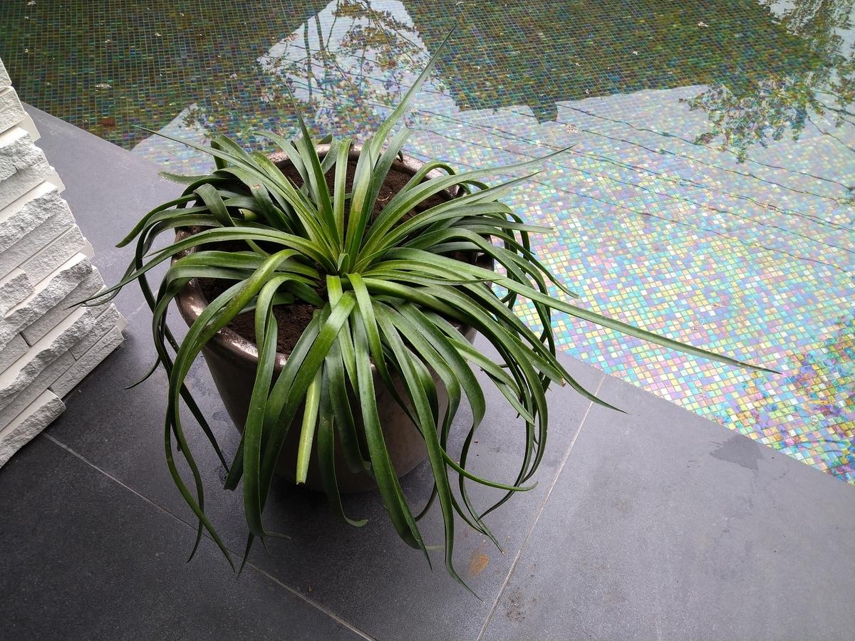 f:id:eiwa-garden:20201204191930j:plain