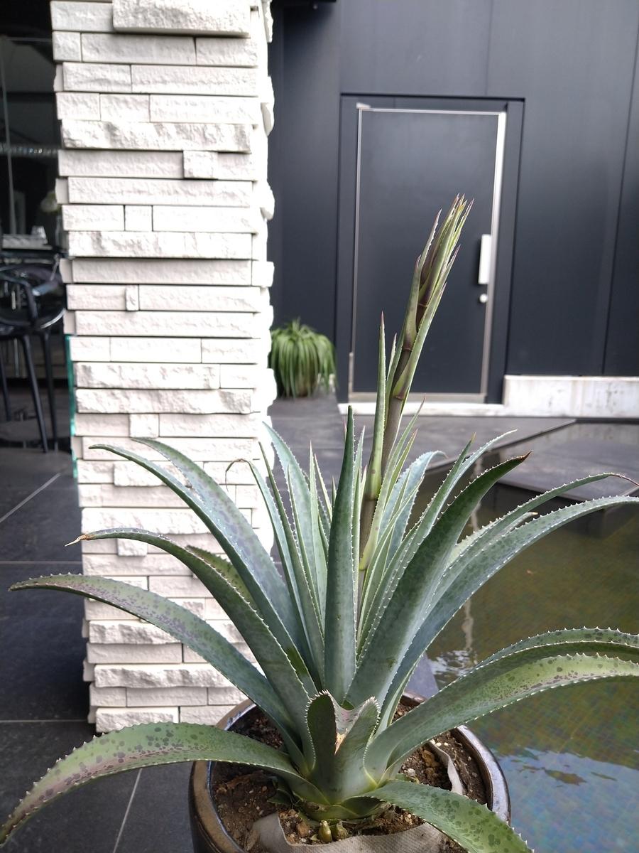 f:id:eiwa-garden:20210910131733j:plain