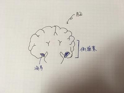 アウトプット大全 脳 海馬 側頭葉