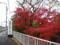 松尾駅の紅葉
