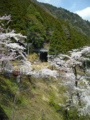 線路、坂道、桜・・・
