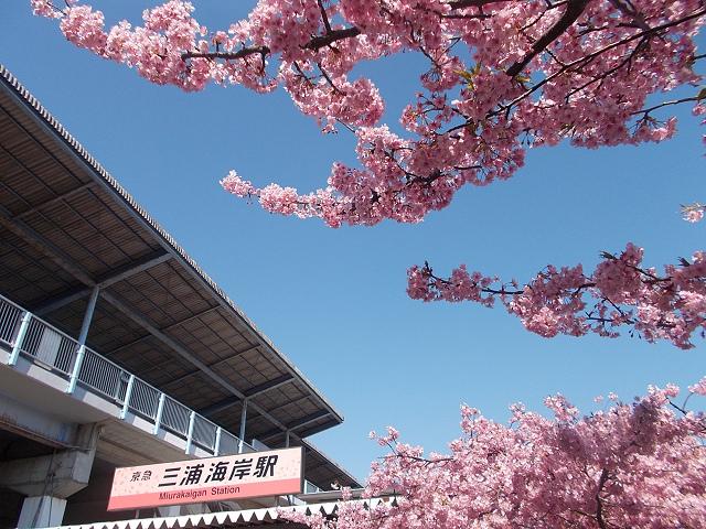 三浦海岸駅(桜色の河津桜バージョン駅名看板)