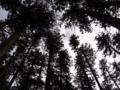 [羽黒山][鶴岡・羽黒][神社]
