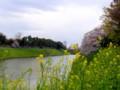 千鳥ヶ淵公園 / Chidorigafuchi Park, Tokyo