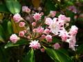 金平糖の花