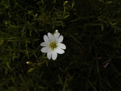 f:id:elmikamino:20070525224907j:image