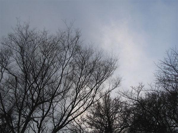 f:id:elmikamino:20081223155536j:image:w450