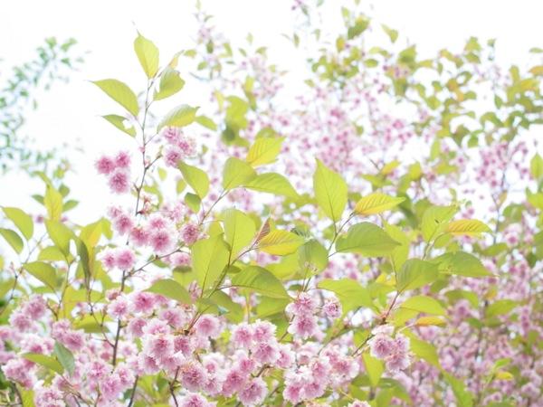 f:id:elmikamino:20120526103459j:image