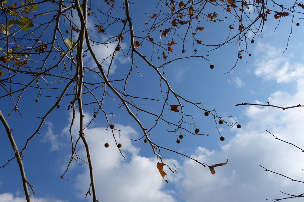 f:id:elmikamino:20121120125221j:image:w600