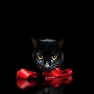 リボンをくわえる黒猫
