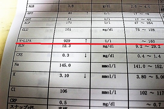 リパーゼの数値
