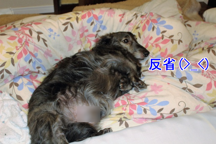 f:id:emikanzaki861:20170519211926p:plain