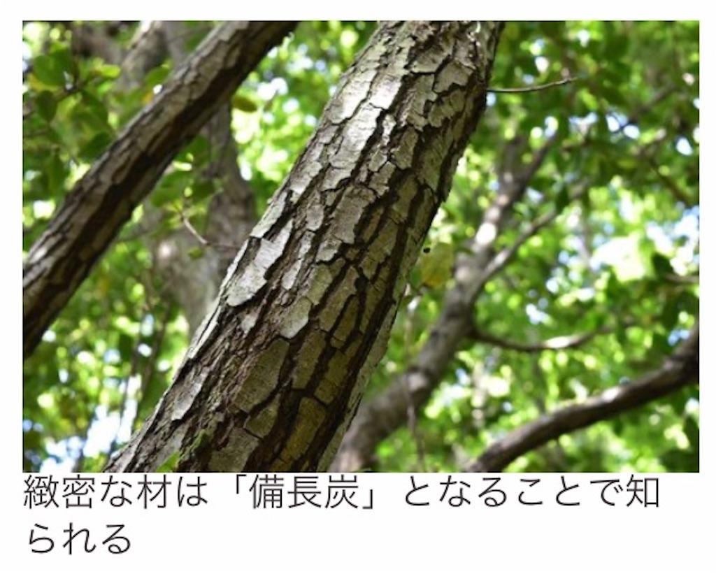 f:id:emiliaikemu4649:20210704110653j:plain