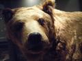 [ハイク][生物]熊