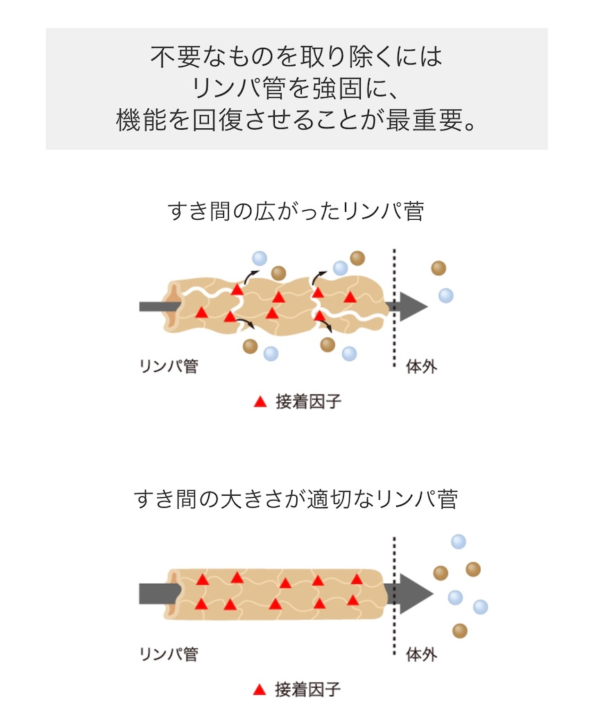 f:id:emma_kaizen:20190822214941j:image