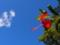 ジャングルの赤いハイビスカス
