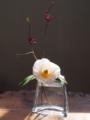 白玉椿とハナズオウ