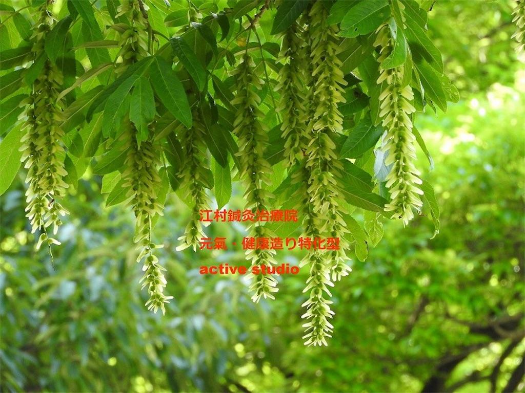 f:id:emurask0417:20170717171925j:image