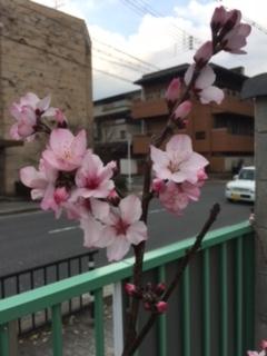 f:id:encho-sensei:20170330170057j:plain