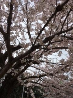 f:id:encho-sensei:20170410234154j:plain