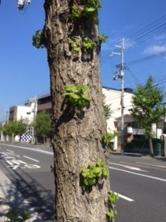 f:id:encho-sensei:20170424211421j:plain