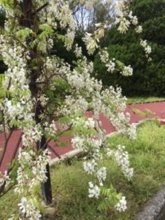 f:id:encho-sensei:20170427202754j:plain
