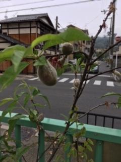 f:id:encho-sensei:20170506213319j:plain