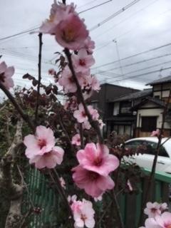 f:id:encho-sensei:20180320192214j:plain