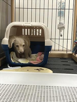 犬が家に来た初日の様子
