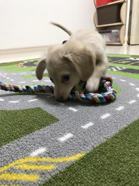チワックス君のロープ遊び
