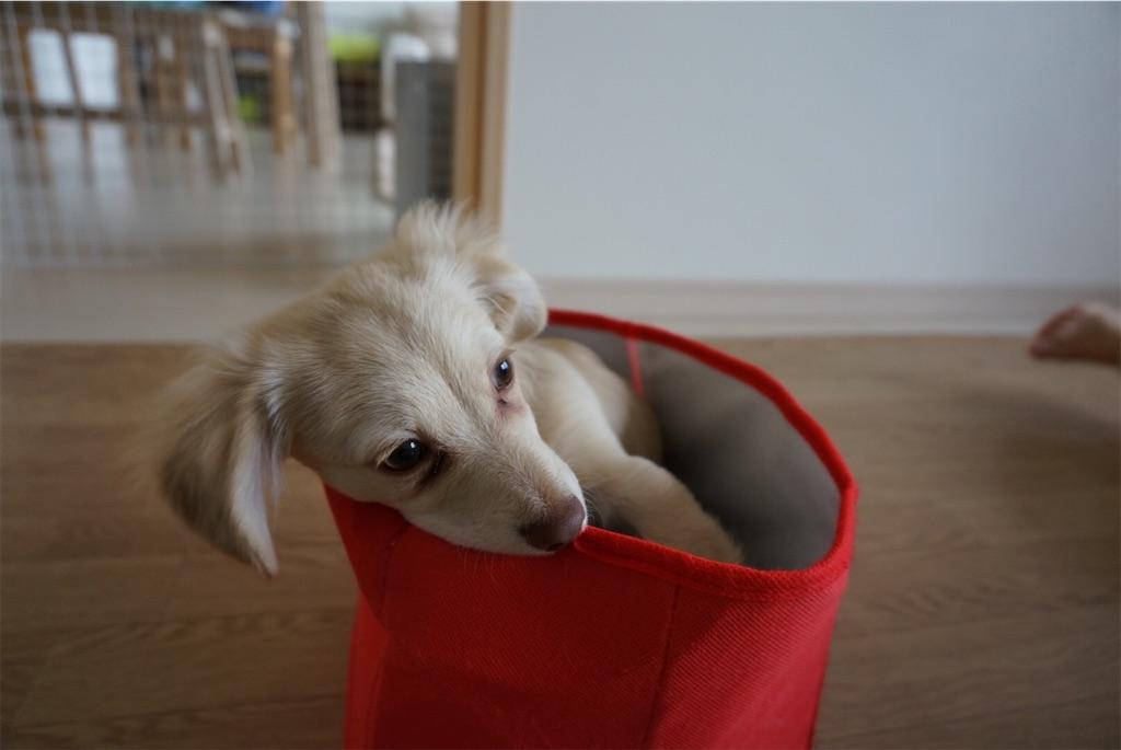 おもちゃ箱に入る