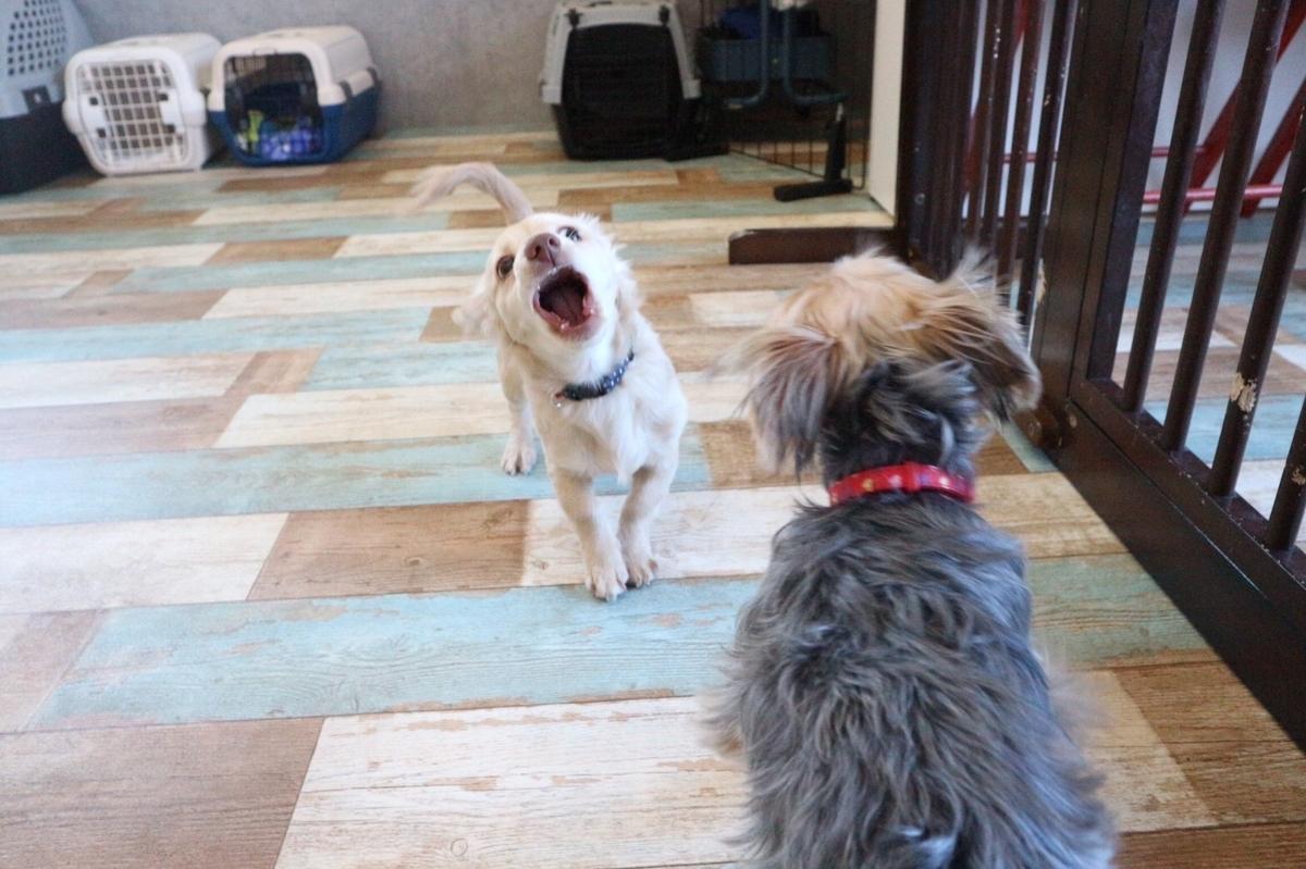 完全に威嚇している犬