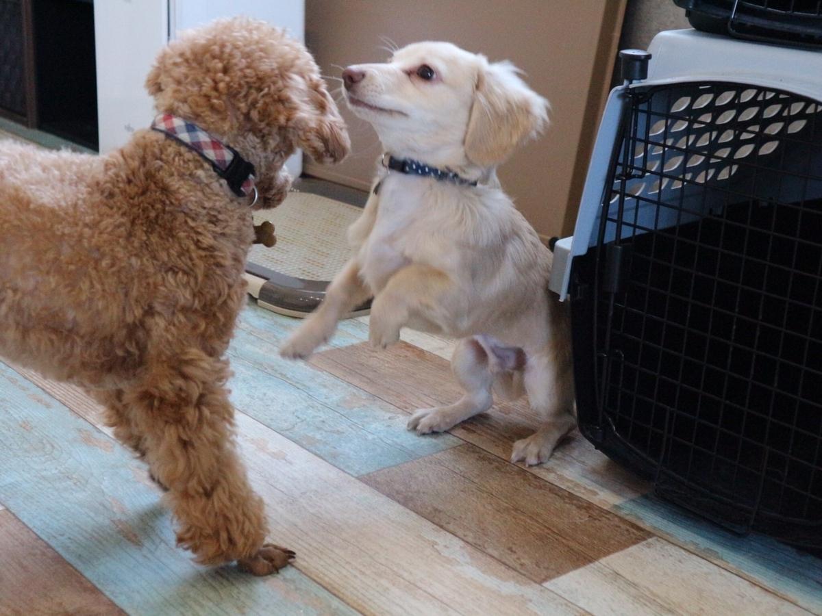 わんちゃんと遊べる犬の幼稚園