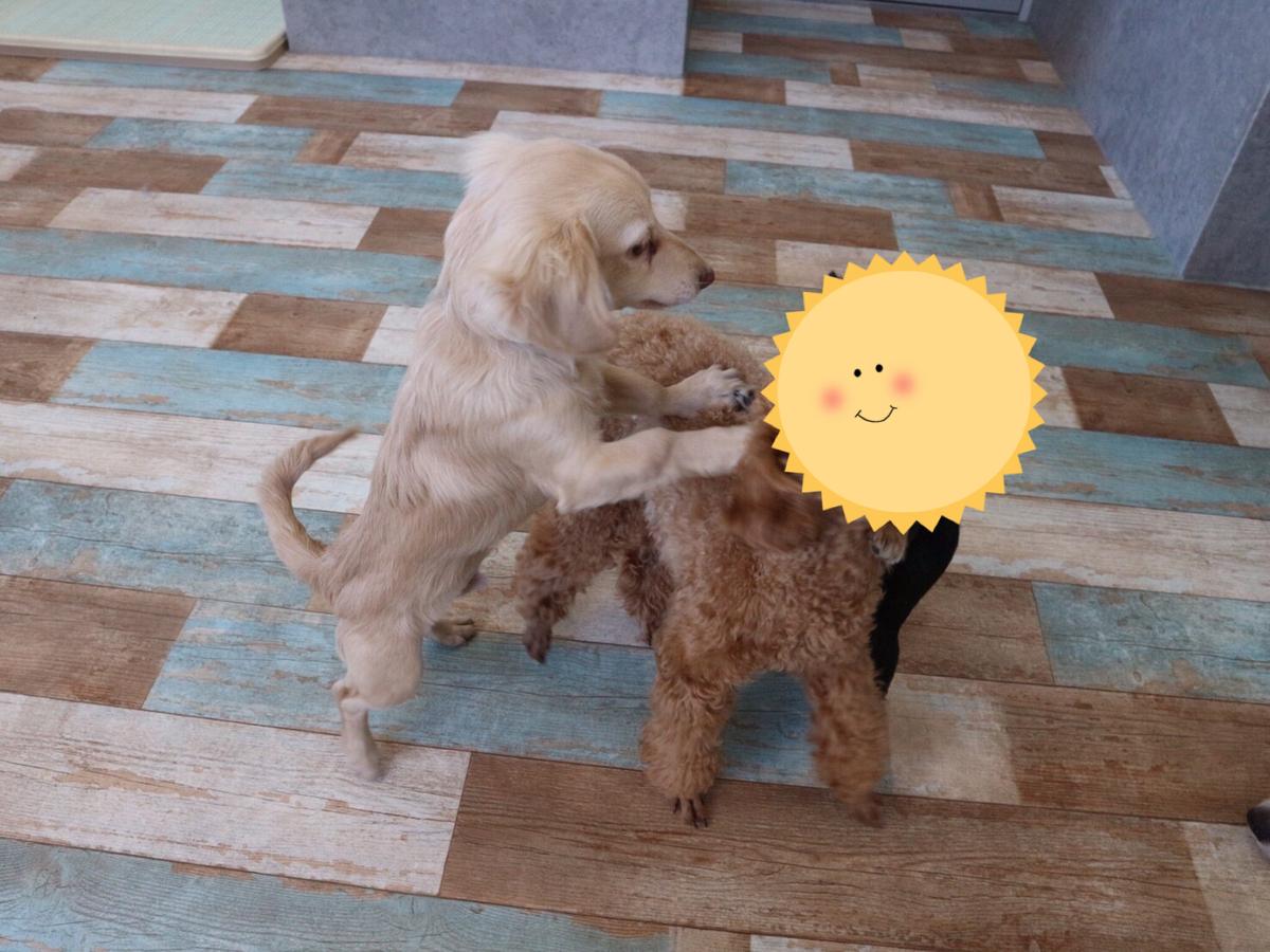 子犬との闘い中