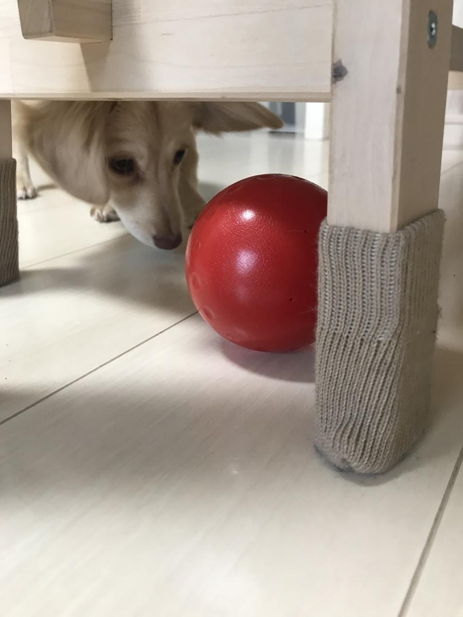 ドギーマン おやつボールで遊ぶ