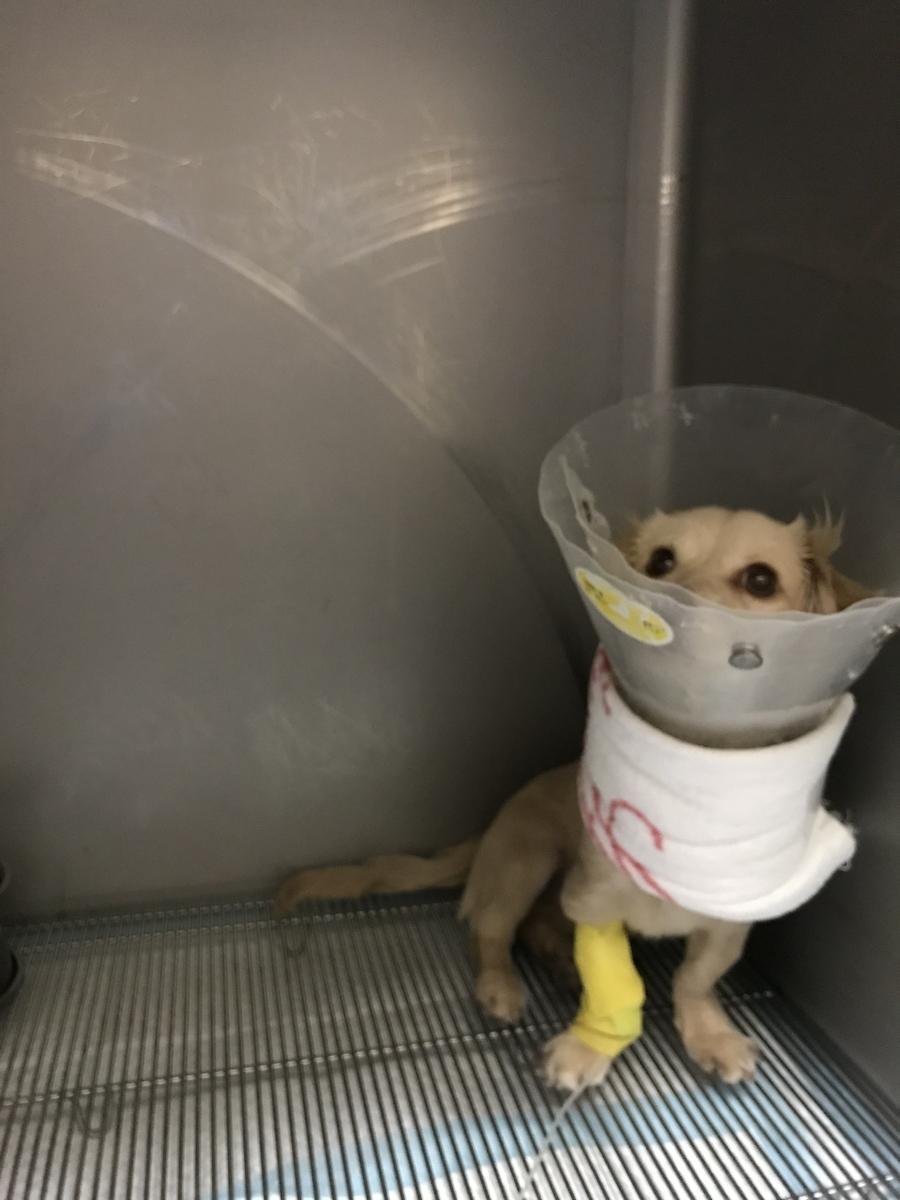 可愛そうな入院中の姿