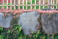 [春][公園][花][flower]庭園のすみっこ。